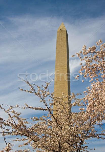 Монумент Вашингтона Cherry Blossom слой цветы Сток-фото © backyardproductions