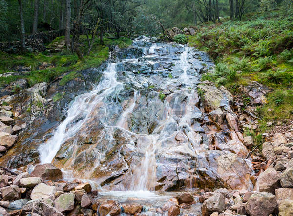 Kwaśny mleka lake district uruchomiony krajobraz zielone Zdjęcia stock © backyardproductions
