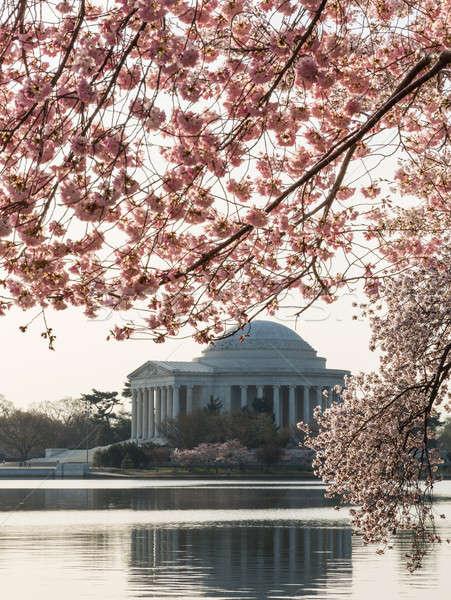 Cherry Blossom and Jefferson Memorial at sunrise Stock photo © backyardproductions