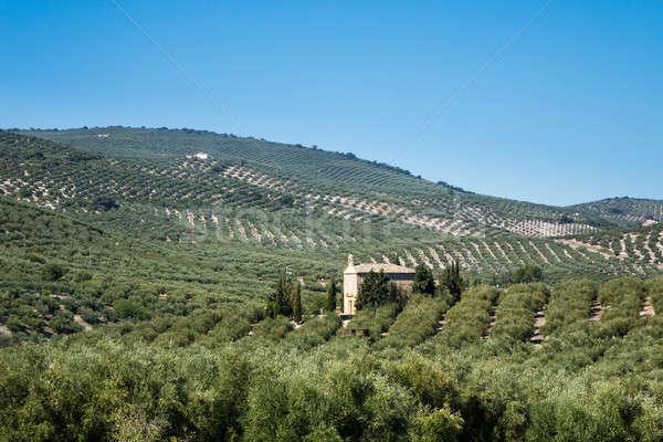 Olajbogyó fák horizont Andalúzia sorok messze Stock fotó © backyardproductions