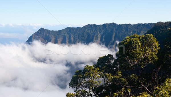 Fog forms on Kalalau valley Kauai Stock photo © backyardproductions