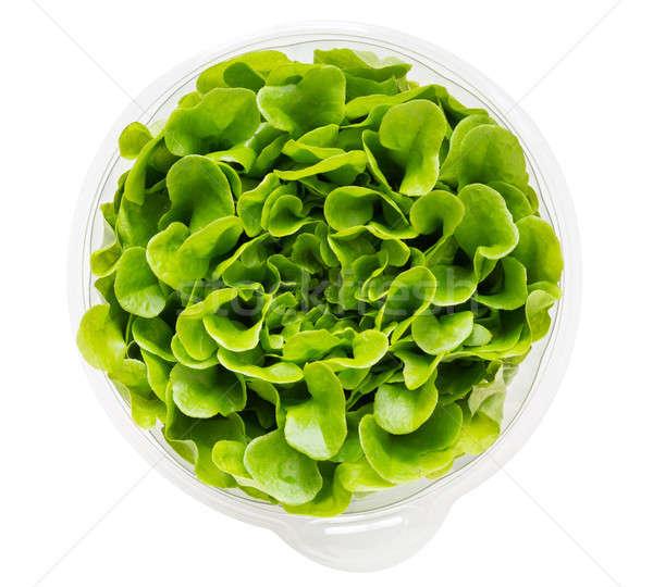 Salanova lettuce in growing mix in plastic Stock photo © backyardproductions