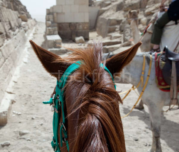 On horse ride by the pyramids in Cairo Stock photo © backyardproductions