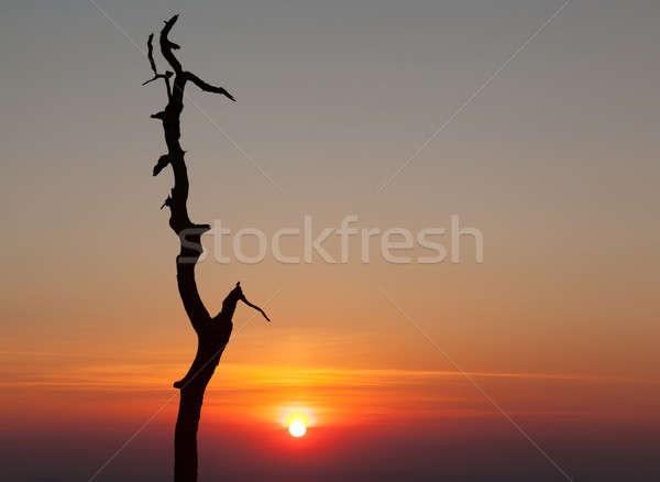 Gnarled tree on Skyline drive in Virginia Stock photo © backyardproductions