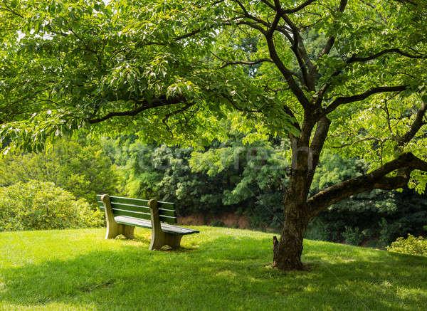 Park bench under flowering dogwood tree Stock photo © backyardproductions