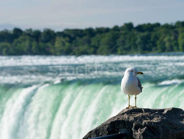 Stockfoto: Hoefijzer · zeemeeuw · waterval · kant · Niagara · Falls · natuur