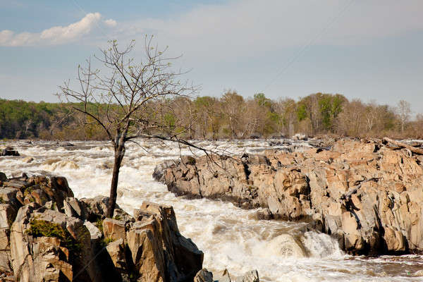 Gaunt tree in front of Great Falls Stock photo © backyardproductions