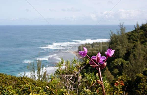 Purple flower over blurred image of Ke'e beach Stock photo © backyardproductions