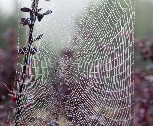 Spinneweb mistig ochtend dauw druppels zijdeachtig Stockfoto © backyardproductions
