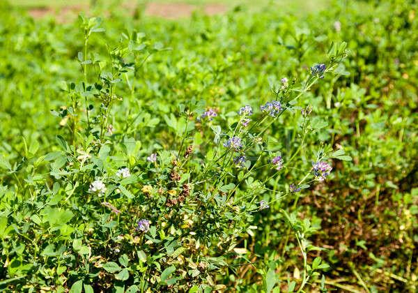 Zaad gebruikt bloemen zaden natuur Stockfoto © backyardproductions