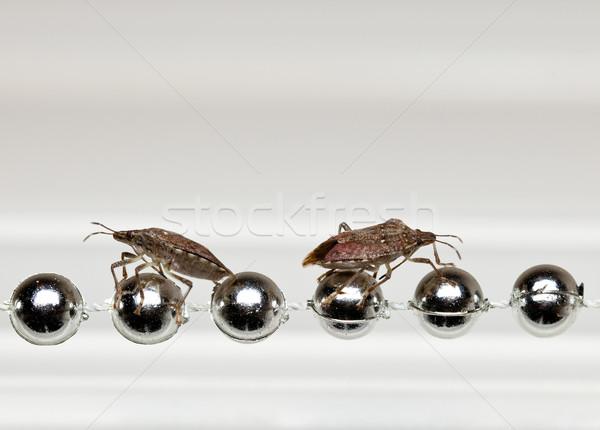 Two Stink bugs on xmas decorations Stock photo © backyardproductions