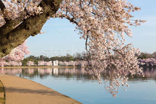 Stok fotoğraf: Detay · Japon · kiraz · çiçeği · çiçekler · ayrıntılı · fotoğraf