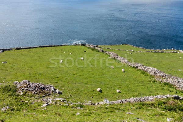 South west coast Ireland near Dingle Stock photo © backyardproductions