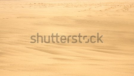 Sandy beach with footsteps in the distance Stock photo © backyardproductions