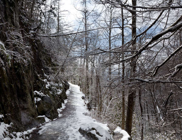 Snowy hike in Smoky Mountains Stock photo © backyardproductions