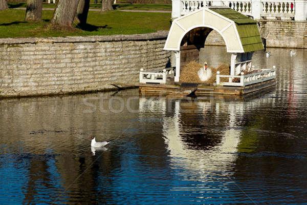 Swan nido Tallinn casa Foto d'archivio © backyardproductions