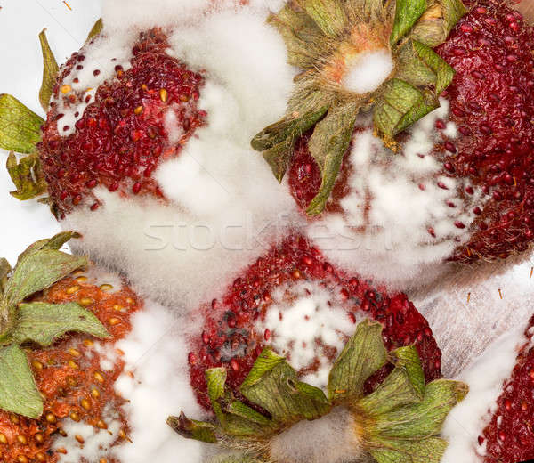 Fresas macro foto cuatro mohoso Foto stock © backyardproductions