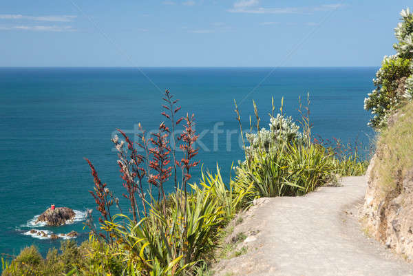 Hiking path around The Mount at Tauranga in NZ Stock photo © backyardproductions