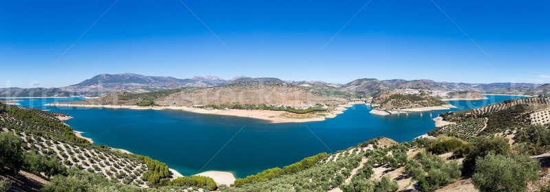 Olajbogyó fák körül tó Andalúzia sorok Stock fotó © backyardproductions