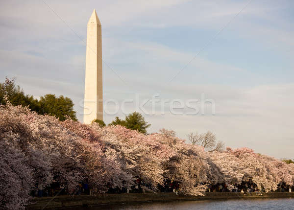 Washington Monument fiore di ciliegio strato fiori riflessione acqua Foto d'archivio © backyardproductions