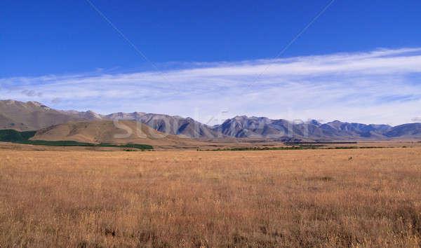 Maize fields frame New Zealand mountains Stock photo © backyardproductions