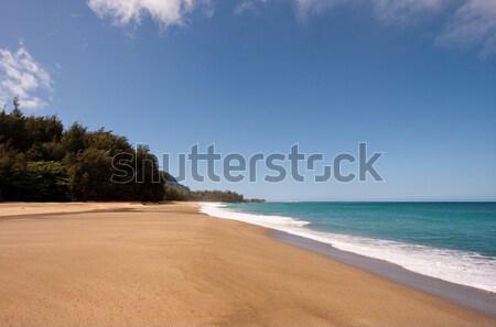 Lumaha'i beach in Kauai Stock photo © backyardproductions