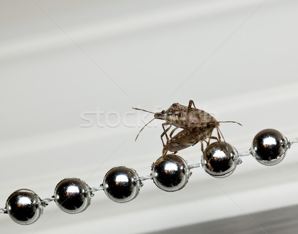 Stock photo: Two Stink bugs on xmas decorations