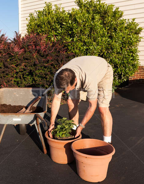 Stock photo: Senior man digging soil in wheelbarrow