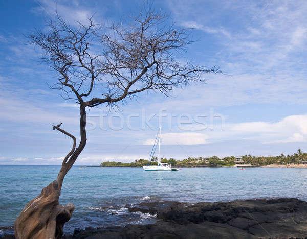 Hawaiian Bay with Tree and Boat Stock photo © backyardproductions