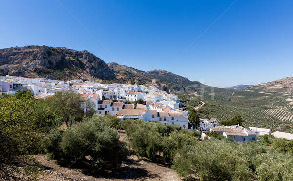 Olive trees surround hilltown of Zuheros in Andalucia Stock photo © backyardproductions