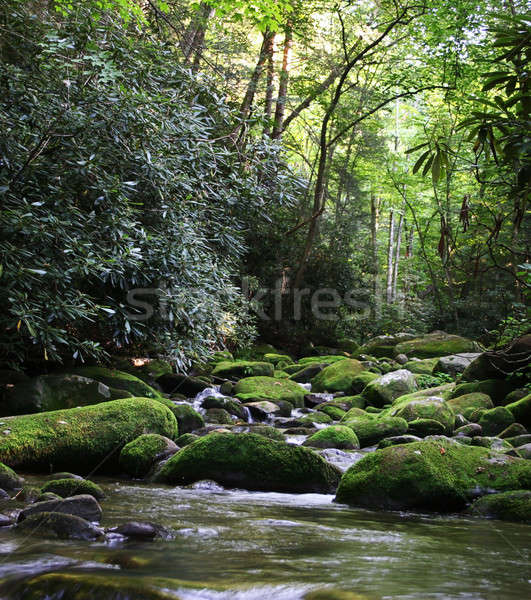 Rural River with Mossy Rocks Stock photo © backyardproductions