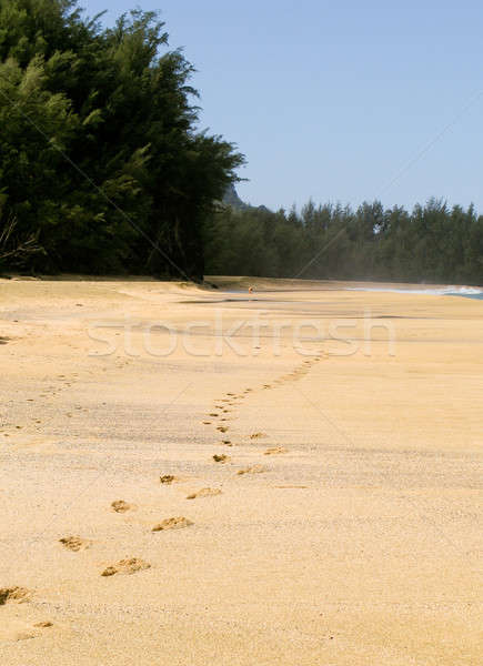 Footsteps receding into the distance Stock photo © backyardproductions