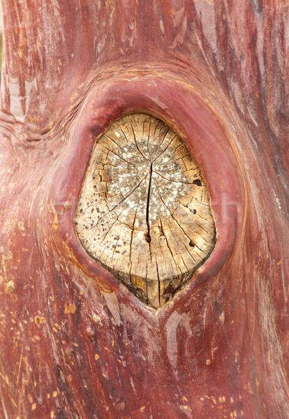 Texture pattern of peeling bark on tree Stock photo © backyardproductions