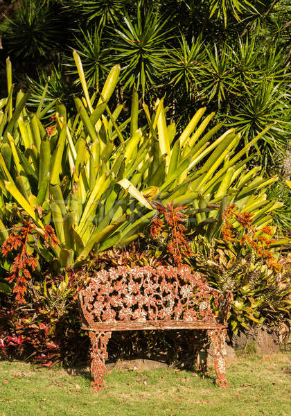 Tropical flowers overwhelm cast iron seat Stock photo © backyardproductions