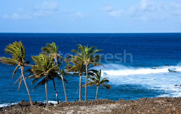 Windswept palm trees by raging ocean Stock photo © backyardproductions