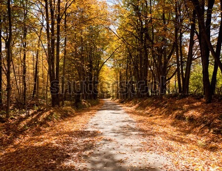 Stock photo: Lonely road in autumn