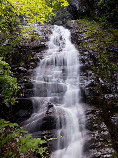 Overall Run waterfall Stock photo © backyardproductions