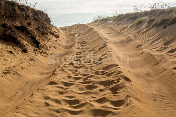 Tire tracks in sand dunes over hill Stock photo © backyardproductions