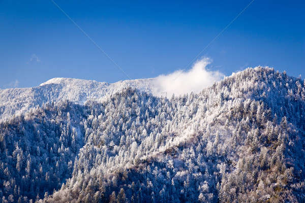 Mount leconte in snow in smokies Stock photo © backyardproductions