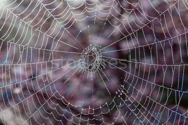 Cobweb on misty morning Stock photo © backyardproductions