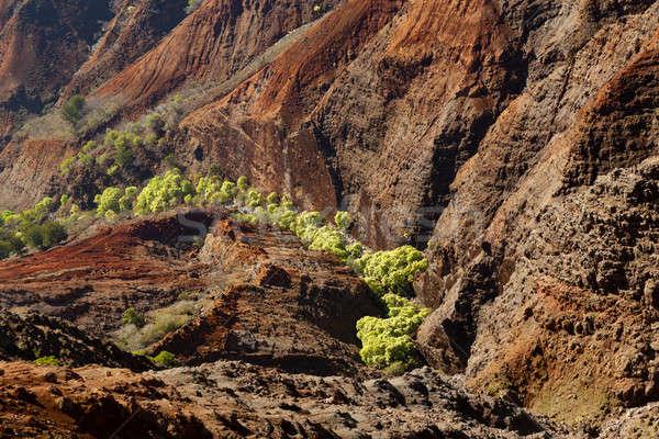 Waimea Canyon on Kauai Stock photo © backyardproductions