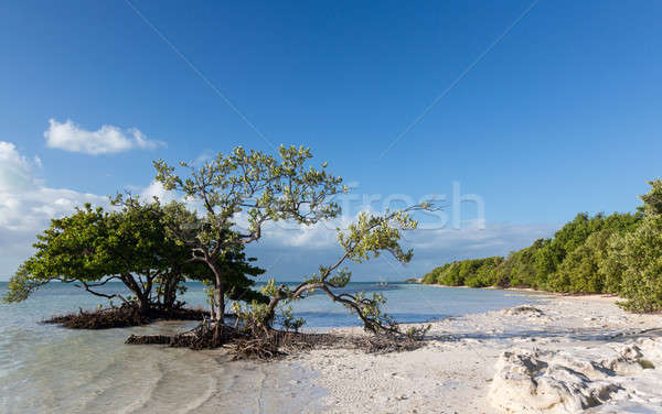 Florida claves playa borde del camino ruta cielo Foto stock © backyardproductions