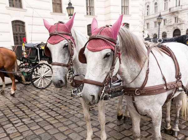 Cavalos Viena Áustria par palácio Foto stock © backyardproductions