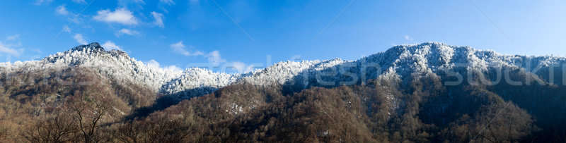Chimney Tops in snow in smokies Stock photo © backyardproductions