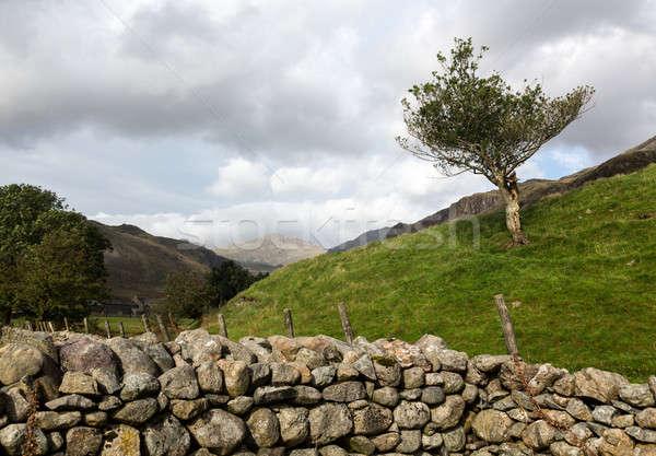 öreg kőfal Lake District ősi kő farm Stock fotó © backyardproductions
