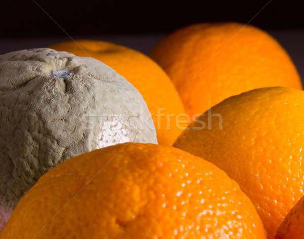 Makró kép narancs penész zöld penészes Stock fotó © backyardproductions