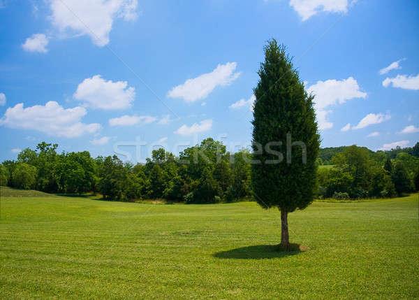 Yaprak dökmeyen çayır ağaç çim büyük bahçe Stok fotoğraf © backyardproductions