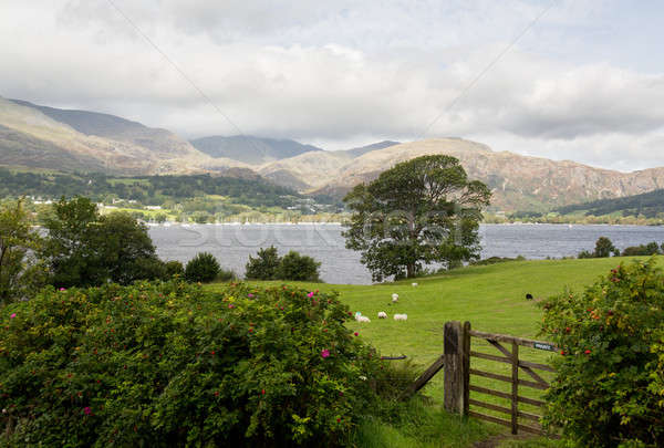 Overlook of Coniston Water in Lake District Stock photo © backyardproductions