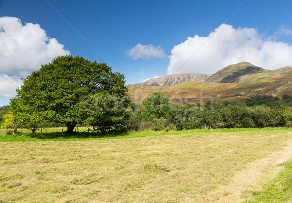Newly mown hay in Buttermere Lake District Stock photo © backyardproductions