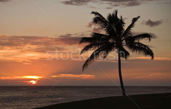 Stock fotó: Naplemente · tenger · Hawaii · pálmafa · előtér · fa